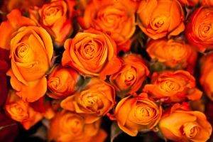 Orange Roses Boston Market by AaronPlotkinPhoto