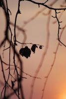 Lonely leaves by Arciih