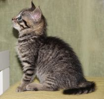 Baby cat 5 by Flore-stock