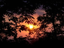 Sunset Wallpaper by donia