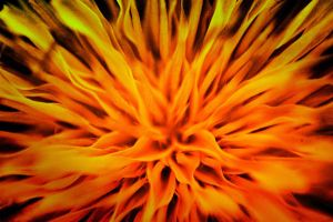 flames of the flower 1a by speed-demon