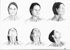 Neck muscles study 1 by cassarlex