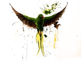 Water color parrot by alexkrat92