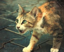 The cat by Ellistrae