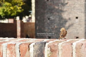 His eye is on the sparrow by simonesta