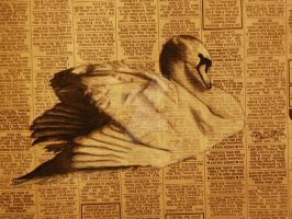 Charcoal Swan on Newspaper by salt-lake-bri