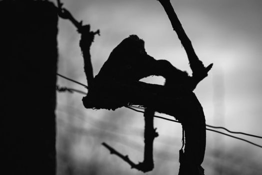 screaming vine by housel1984