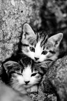 More kitties by WrappedUpInBooks