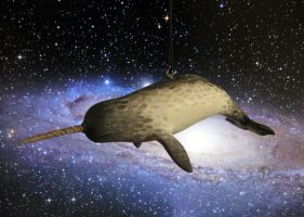 Space Narwhal by angelac