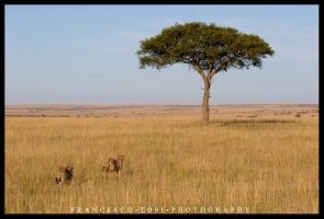 Kenya views 31 - The Hunt 1 by francescotosi