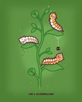 Caterpillars by randyotter