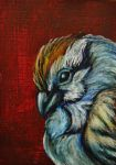 ACEO--Chipping Sparrow by SpiderMilkshake