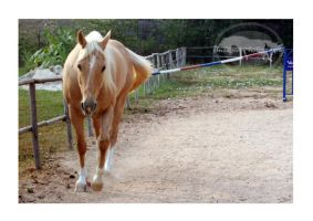 Happy 4th by Uncaged
