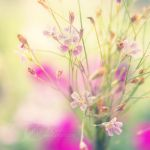 iridescent by lpdragonfly