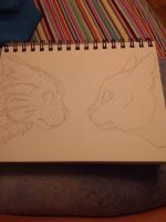 Jayfeather and Rock (WIP) by AxelK4