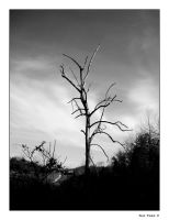 The Tree V by ackeibler