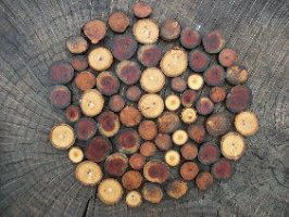 Mixed Wood Jewelry Blanks by PymatuningCrafts