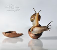 Snails in a Nutshell by MichelleRamey