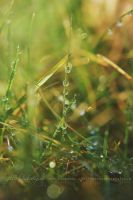 Wet Grass by Estelle-Photographie
