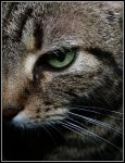 The Green Eye by kanes