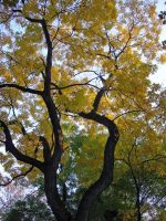 Yellow Autumn by kaparo