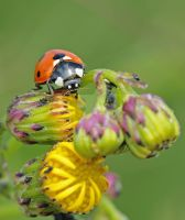 bug bugging... by clochartist-photo
