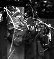 The Haunted Garden by Forestina-Fotos
