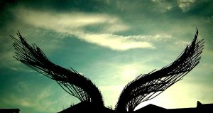Angel Wings by Dante-Xavier