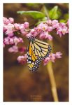 Butterfly - Gran Canaria 2013 by synthes