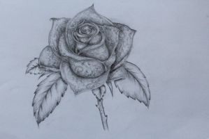 Rose by monmonz77