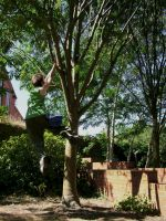 Zade - Tree Swinging I by Zade-uk