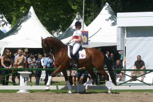 Dressage Riding Trot Stock by LuDa-Stock