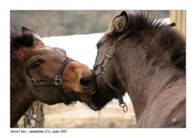 horse's kiss by kphotos