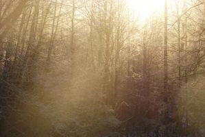 Into the Mystic by Morna