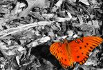 Butterfly Wallpaper by Kate419882