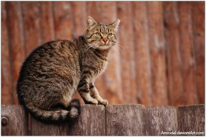 Alley Cat by amrodel