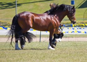 STOCK - Gold Coast Show 304 by fillyrox