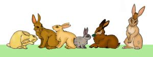 Watership Down fanart by hermitchild
