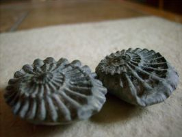 ammonites by ingeline-art