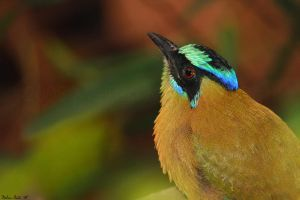 Motmot Profile by mydigitalmind