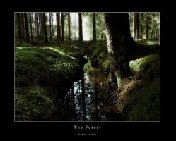 The Forest by Karl-Filip