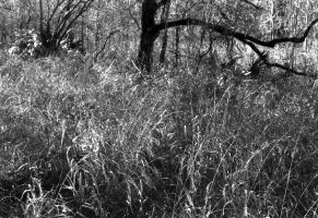 grasses and trees by lamorth-the-seeker