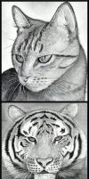 How to Draw Felines by finalprodigy