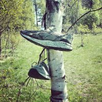 Old sportshoes in a tree by attomanen