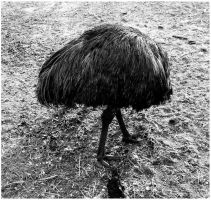 Emo, I mean..... Emu by Delacorr