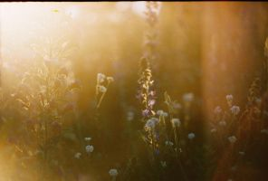 Made by Zenit 1 by haania