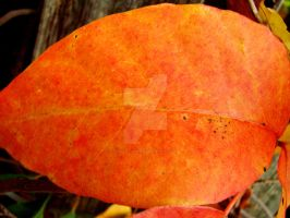 Touch of Fall VI by TriciaStucenski