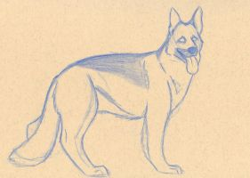 German Shepherd by wolfhappy