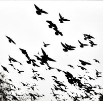 Birds...Birds..Birds by Treamus
