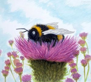 Bumblebee on a Thistle by PhilipHarvey